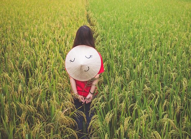 Cánh đồng lúa và Nón Lá