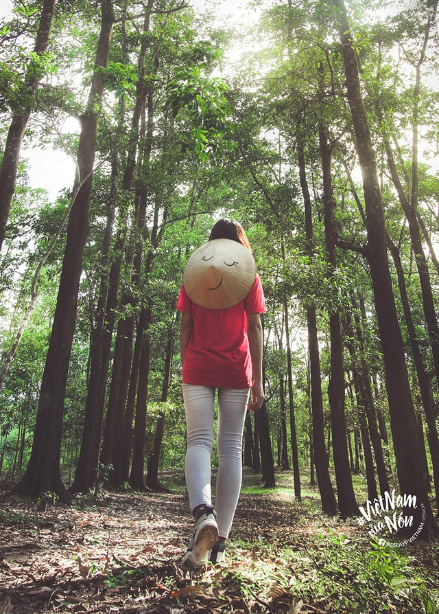 Nón Lá dạo rừng thông Quảng Trị