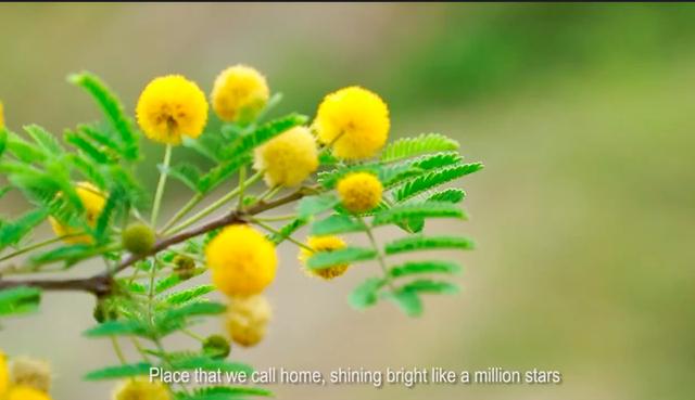 MV tuyệt đẹp giới thiệu Việt Nam của bạn trẻ SSEAYP - 2