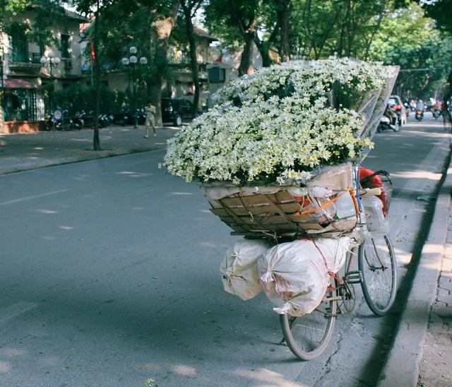 Gánh xe hoa những ngày này chỉ bán duy nhất hoa mi