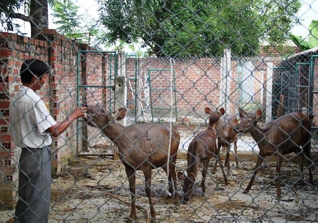 Trồng rừng kết hợp nuôi hươu, nai đem lại thu nhập khủng cho gia đình ông Đào