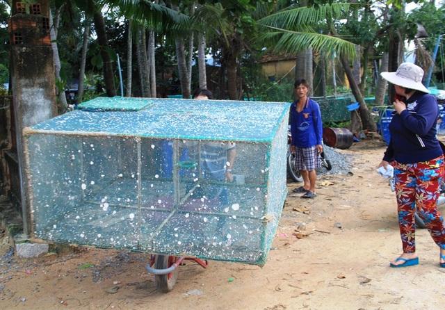 Những lồng tôm hùm bị chết người dân kéo lên bờ vệ sinh để chuẩn bị tiếp tục thả lứa mới.