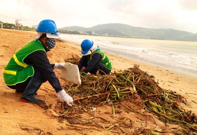 Mỗi ngày công nhân thu dọn hàng chục tấn bèo dính bùn và cát tấp vào bãi biển Quy Nhơn