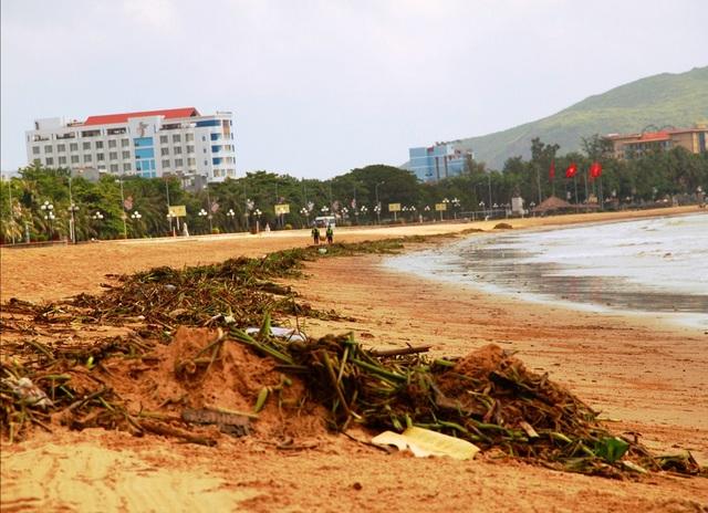 Sau lũ, bèo và rác các loại tấp đầy bãi biển Quy Nhơn (TP Quy Nhơn, Bình Định)