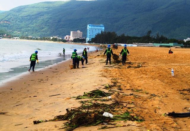 Hàng chục công nhân môi trường dọn bèo trả lại sạch sẽ cho bãi biển du lịch