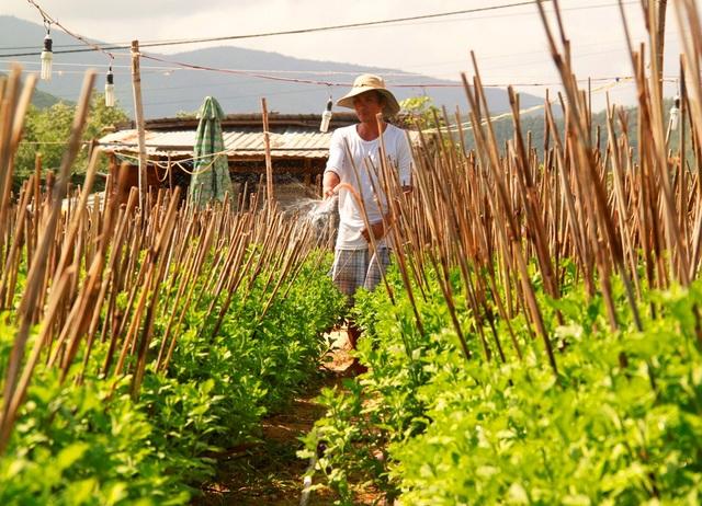 Nghề trồng cúc rất tỉ mẩn, công phu để có chậu cúc đẹp trưng bày những ngày Tết cổ truyền
