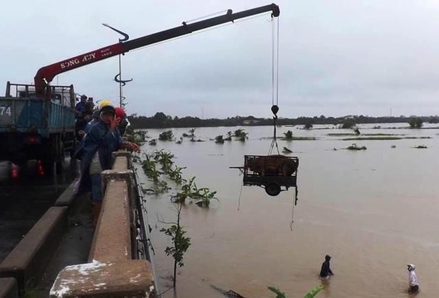 Hàng chục con bò của người dân Phú Yên được cẩu lên khỏi dòng nước lũ