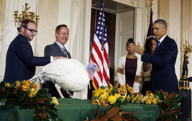 Nghi lễ xá tội cho gà tây vào lễ Tạ ơn năm 2014 được Tổng thống Obama thực hiện trong phòng, thay vì ngoài trời, ở cổng phía bắc của Nhà Trắng. Lễ Tạ ơn được người Mỹ tổ chức hàng năm vào thứ 5 cuối cùng của tháng 11. Đây là dịp để mọi người cảm ơn Chúa vì đã ban phát phước lành cho họ. (Ảnh: Reuters)