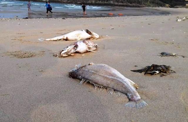 Theo điều tra, xác minh ban đầu thì tỉnh Quảng Bình là địa phương chịu thiệt hại nặng nề nhất từ sự cố môi trường biển