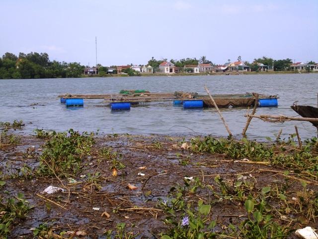 Người nuôi cá lồng cho rằng, nguyên nhân chính làm cá chết là do nước thải nông nghiệp xả ra mang theo nhiều rác thải, bèo và rơm rạ khiến nước bị ô nhiễm