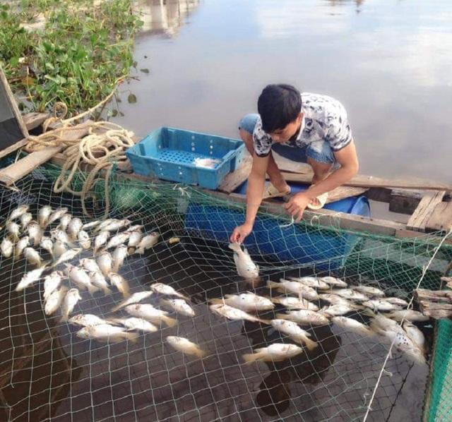 Gần 20 tấn cá của người dân thôn Cồn Sẻ đã bất ngờ bị chết hàng loạt.