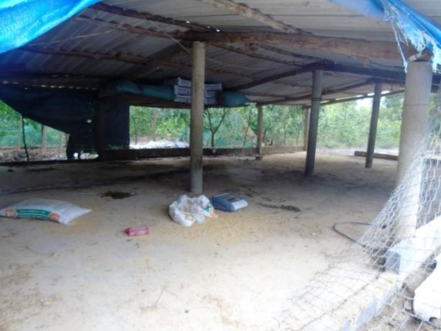Lũ cuốn đi tất cả, giờ nhiều chủ trang trại ở huyện Lệ Thuỷ chỉ còn lại chuồng không