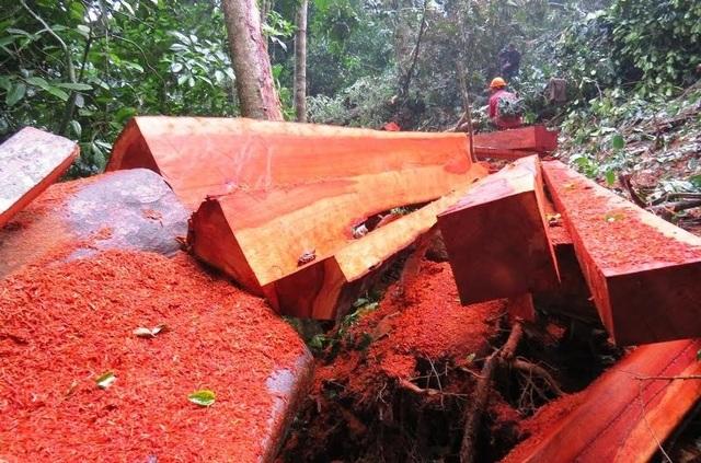 Hiện trường phá rừng ở xã Hoá Sơn (Ảnh: N.P)