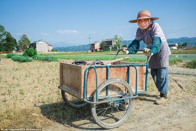 Bà cụ đang làm việc trong nông trại gia đình ở phía tây bắc Tokyo.