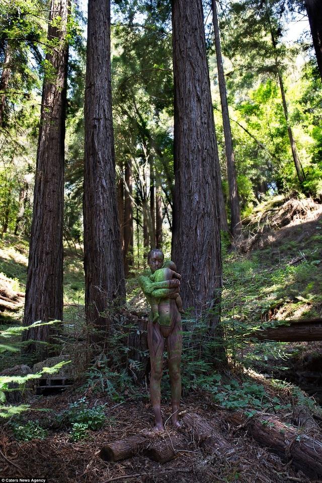 Công viên Santa Cruz Redwoods, Felton, California, Mỹ.