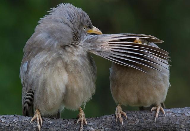 Khoảnh khắc hài hước của hai chú chim.