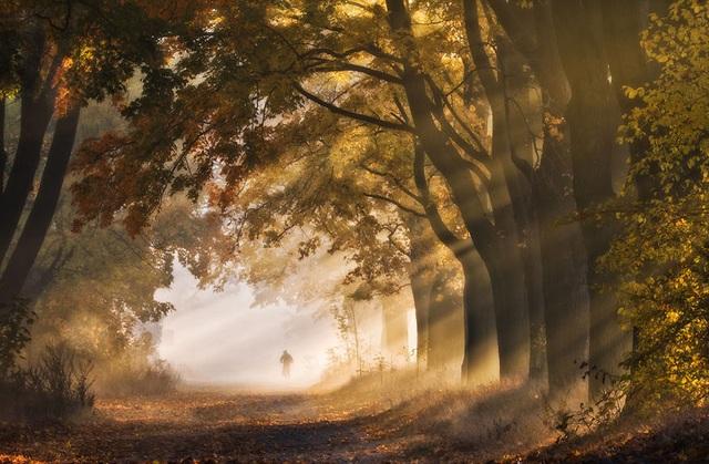 """Bộ ảnh đẹp ngoạn mục chụp ở nơi """"trái tim của mùa thu"""" - 1"""