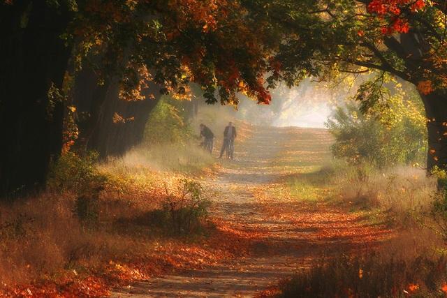 """Bộ ảnh đẹp ngoạn mục chụp ở nơi """"trái tim của mùa thu"""" - 2"""