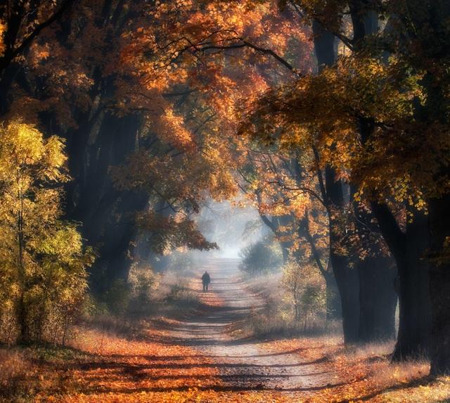 """Bộ ảnh đẹp ngoạn mục chụp ở nơi """"trái tim của mùa thu"""" - 4"""