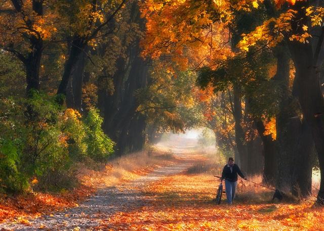 """Bộ ảnh đẹp ngoạn mục chụp ở nơi """"trái tim của mùa thu"""" - 6"""