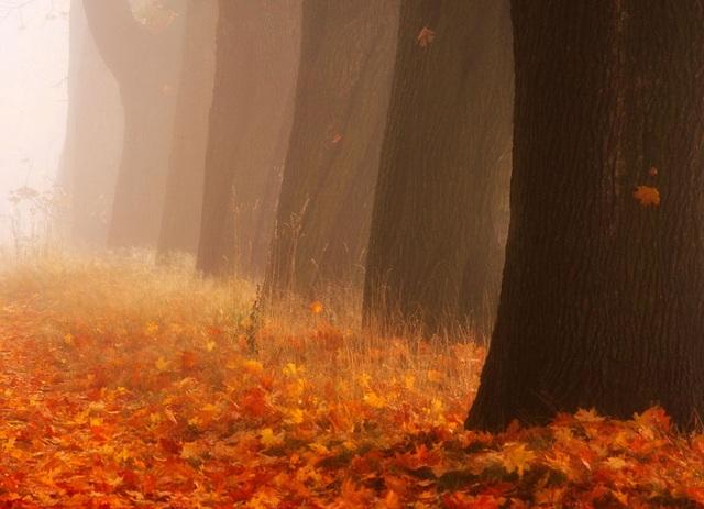 """Bộ ảnh đẹp ngoạn mục chụp ở nơi """"trái tim của mùa thu"""" - 7"""