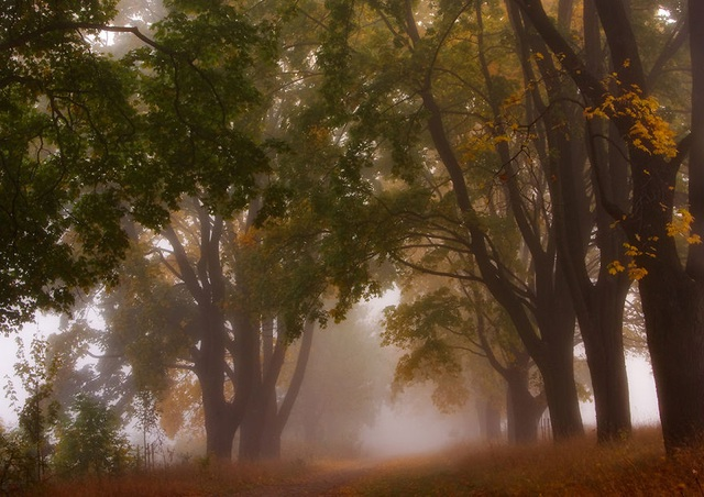 """Bộ ảnh đẹp ngoạn mục chụp ở nơi """"trái tim của mùa thu"""" - 8"""
