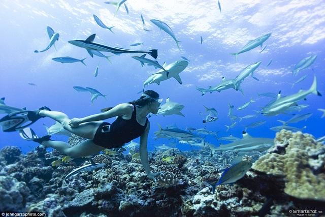 Cô cho biết mình chưa từng gây hại cho một sinh vật nào và cũng chưa từng ở vào một tình huống hiểm nghèo nào khi bị sinh vật biển tấn công.