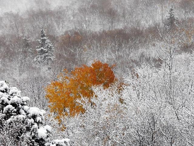 Tuyết rơi về đêm đã bắt đầu xuất hiện ở thị trấn Franconia, bang New Hampshire, Mỹ.