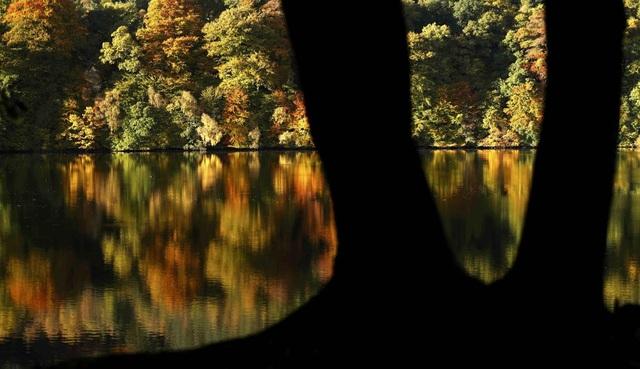 Cảnh thu phản chiếu xuống mặt hồ Loch Faskally ở Pitlochry, Scotland.