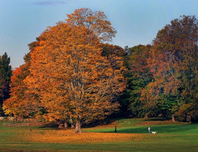 Buổi sáng sớm trong công viên Minute Man ở Concord, bang Massachusetts, Mỹ.