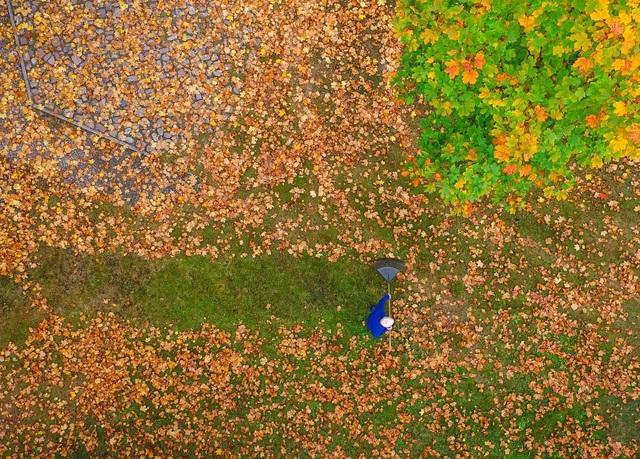 Một người đàn ông đang quét lá thu trên thảm cỏ ở Brandenburg, Đức.