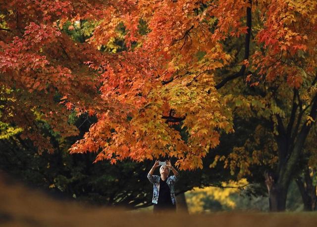 Công viên Washington Park ở thành phố Albany, bang New York, Mỹ.