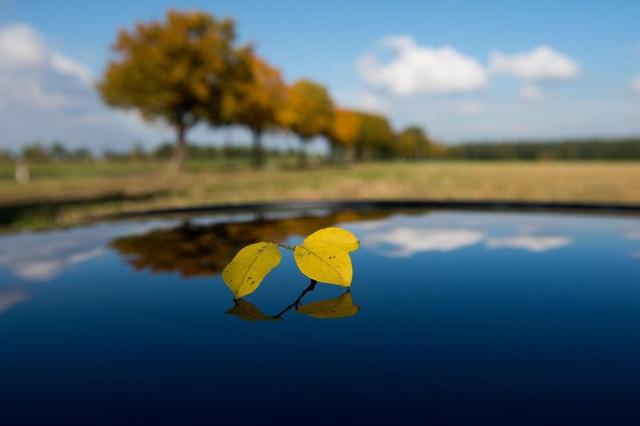 Lá vàng rơi trên nóc xe hơi, phản chiếu bầu trời xanh biếc ở Visselhoevede, Đức.