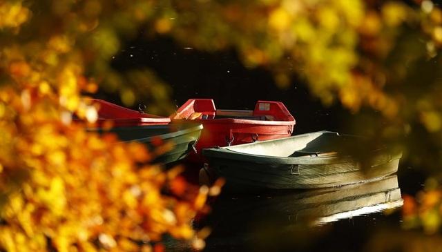 Thuyền neo đậu bên hồ Loch Faskally, Scotland.