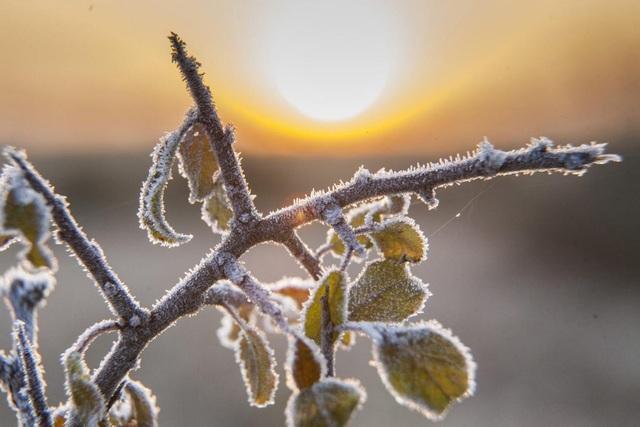 Sương muối phủ trên cành cây. Ảnh chụp ở làng Homokkomarom, Hungary.