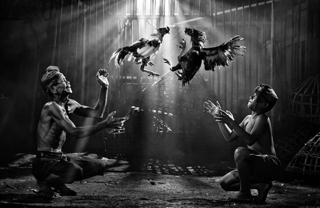 Giải nhì thuộc về tay máy Pimpin Nagawan (Indonesia) với tác phẩm ảnh chụp tại Jakarta, ghi lại cảnh hai người đàn ông đang quan sát hai con gà chọi chiến đấu.