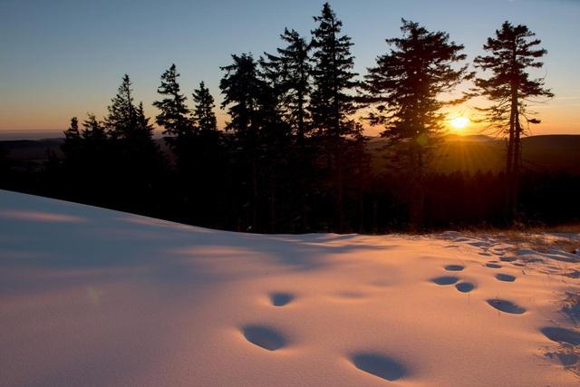Những dấu chân để lại trên lớp tuyết dày ở núi Wurmberg, thuộc miền trung nước Đức.