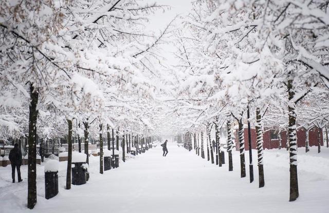 Người phụ nữ bước đi trong cơn bão tuyết ở Stockholm, Thụy Điển.