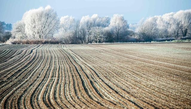 Sương muối bao phủ cảnh vật ở đô thị Sieversdorf, miền đông nước Đức.