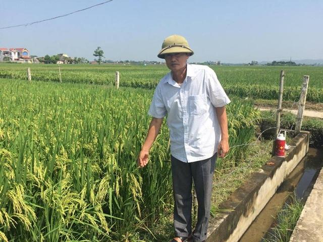 Ông Lê Văn Dung, tại Thị Trấn Vạn Hà chia sẻ về mô hình phát triên cánh đồng mẫu lớn.