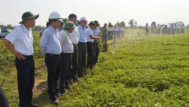Mô hình trồng lạc tưới tiết kiệm nước ở xã Cam Thủy, huyện Cam Lộ.