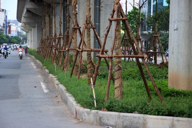 Nhiều người băn khoăn những cây xanh mới trồng này khi phát triển lên liệu có ảnh hưởng đến an toàn công trình đường sắt trên cao?