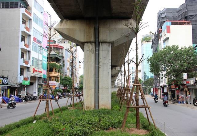Hà Nội trồng hàng trăm cây xanh dưới gầm đường sắt trên cao - 3