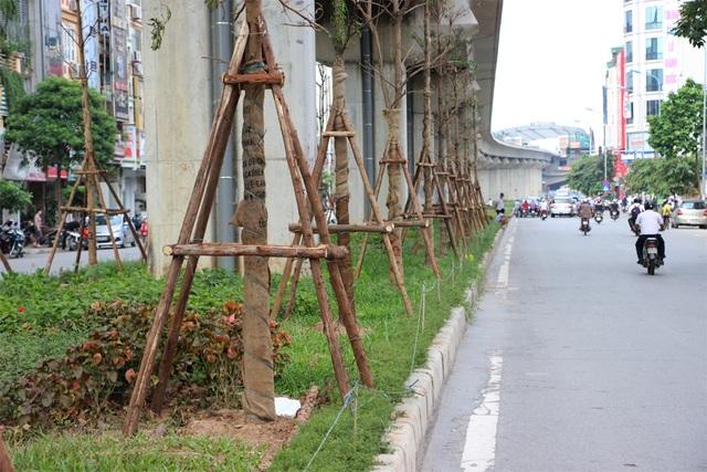 Hà Nội trồng hàng trăm cây xanh dưới gầm đường sắt trên cao - 2