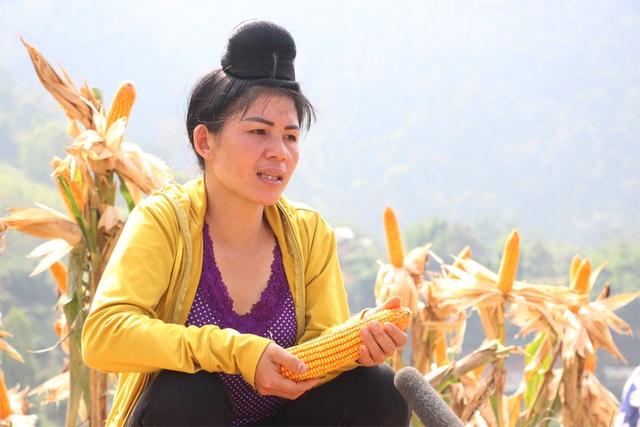 Chị Uôn cho biết, kinh tế gia đình đã khá hơn trước nhờ trồng ngô biến đổi gen.