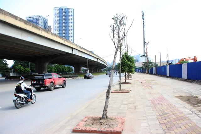 Cây xanh chết hàng loạt trên đường Nguyễn Xiển.