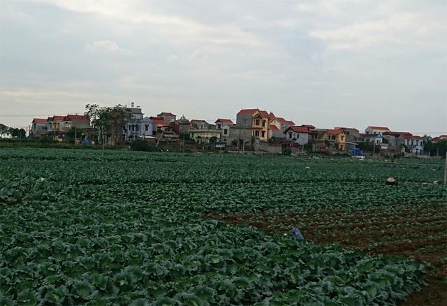 Người dân xã Văn Đức trồng rau màu rất nhiều, chính vì vậy lượng thuốc sâu phun trên những cánh đồng khá nhiều, đó là lý do mà người dân nơi đây lo ngại về nguồn nước mưa khi họ đang sử dụng.