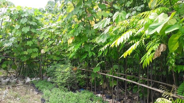 Nhiều cây quý, có giá trị ở di tích Huế đang được nhân giống, phục hồi tại Vườn sưu tập nhân giống, bảo tồn các giống cây di tích