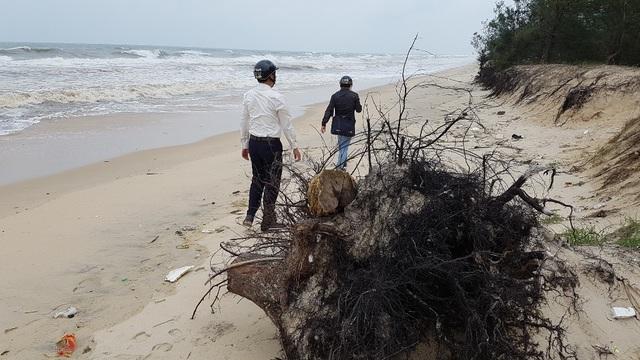 Những đoạn bờ biển bị sạt lở nặng ở thôn Tân An, Trung An của xã Phú Thuận