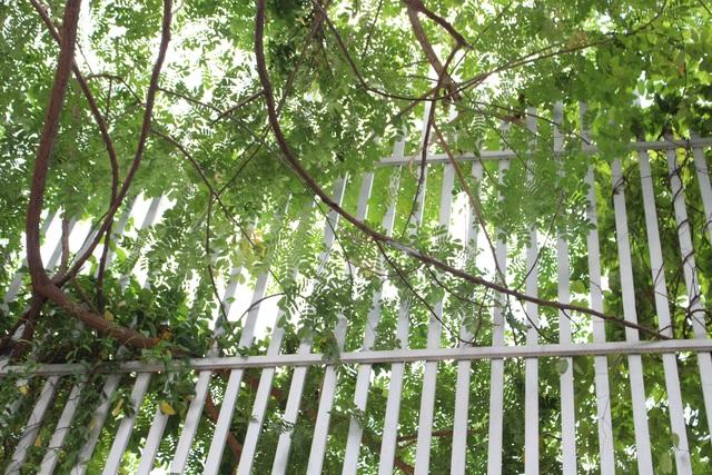 Những ngày hè oi ả, cây cung cấp bóng mát và mang lại bầu không khí trong lành toàn ngôi nhà